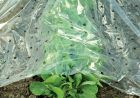 CircumPro Frühbeetfolie 1,5x10m transparent